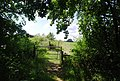 Gate on the Bridleway towards Tollhurst Farm - geograph.org.uk - 1375200.jpg