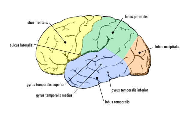 Temporal Lobe Epilepsy Chat Room