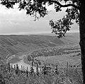 Gezicht op Wolf met de heuvels en wijngaarden aan de moezel, Bestanddeelnr 254-4441.jpg