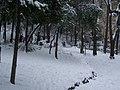Giardini Tito Rosina - panoramio - Emanuela Meme Giudic… (11).jpg