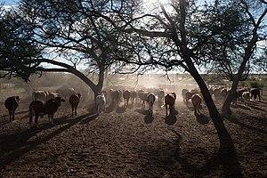Gobabis - Typical Cattle Farm near Gobabis