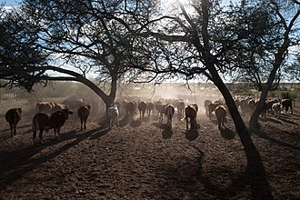 Gobabis - Typical Cattle Farm near Gobabis