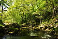 Golitha Falls (4027).jpg