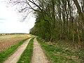 Goody Orchin Plantation. - geograph.org.uk - 162091.jpg