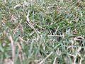 Grass best image.jpg