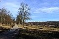 Große Stockwiese Lainzer Tiergarten 002.JPG