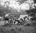 Groep meisjes bezig met koken van een maaltijd en het stoken van vuur, Bestanddeelnr 904-0975.jpg