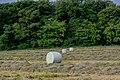 Growiss, Sandweiler-105.jpg