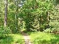 Gruenau - Waldweg (Woodland Path) - geo.hlipp.de - 37631.jpg