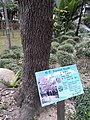 HK 中環 Central 遮打花園 Chater Garden flora green leaves n trees March 2020 SS2 79.jpg