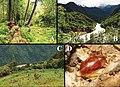 Habitats of Latindiinae (10.3897-zookeys.867.35991) Figure 11.jpg