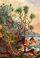 Haeckel 06.jpg