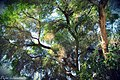 Hagrid Tree (32083435).jpeg