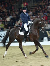 An upper-level dressage competitor performing an extended trot