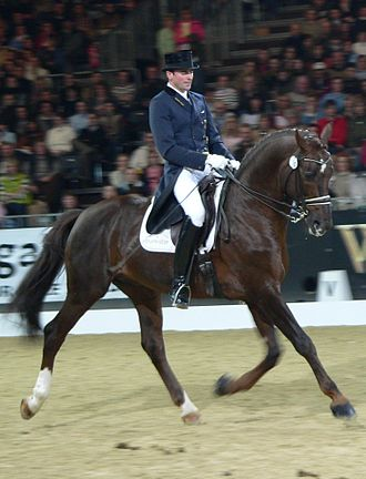 Dressage - An upper-level dressage competitor performing a working trot