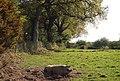 Happy as a pig in mud^ - geograph.org.uk - 1288908.jpg