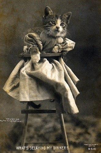 Lolcat - 1905 cat postcard by Harry Whittier Frees