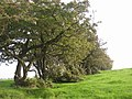 Hedge off Lindley Moor Road, Lindley - geograph.org.uk - 262285.jpg