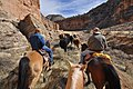 Herding cows out of Snake Gulch (6847221883).jpg
