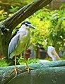 Heron (55977256).jpeg