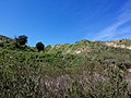 Hiking Towsley Canyon (2324681088).jpg