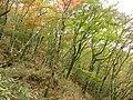 Hinokiboramaru-tsutsujishindou-bunarin.JPG