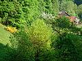 Hofanlage Erlenbach im Frühling.JPG