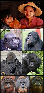 Hominidae Family of mammals