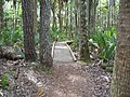 Hontoon Island State Park bwalk01.jpg