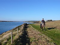 Horse Riding along the Fleet - geograph.org.uk - 1070686.jpg