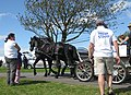 Horse and carriage ride - geograph.org.uk - 1466759.jpg