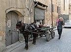 Horse in Aleppo.jpg