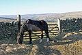 Horse on bridleway - geograph.org.uk - 692184.jpg