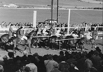 Starting gate - A strand barrier start of a horse race in South Australia in 1952