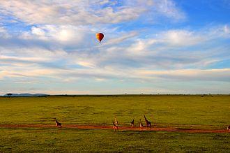 Maasai Mara - A hot air balloon safari