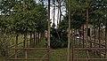 I WW, Military cemetery No. 320 Niedary, Poland.jpg