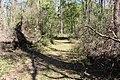 Ichetucknee Springs State Park Trestle Point trail 8.jpg