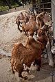 Igualdad Animal - 2385 (7139041351).jpg