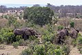 Impressions of Serengeti (131).jpg
