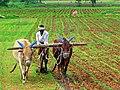 India Farming.jpg