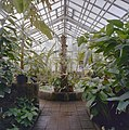 Interieur, overzicht plantenkas - Delft - 20404922 - RCE.jpg