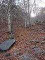 Invierno 2011 en Tejera negra - panoramio (19).jpg