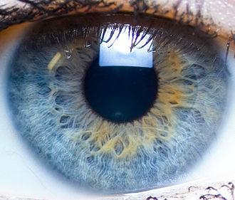 Visual memory - Close up of the human eye, the main organ of visual sensation.