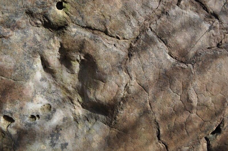 Isochirotherium Footprint - geograph.org.uk - 2359261