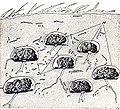 Isoptera sandias 01.jpg
