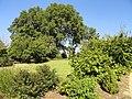 J. C. Raulston Arboretum - DSC06146.JPG