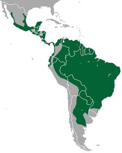 Distribution du jaguarondi