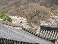 Jangangsa Temple Roofs, Busan, Korea.jpg
