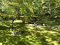 Japanese Garden (15860049507).jpg