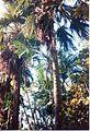 Jardin de Pamplemousses (3005314296).jpg